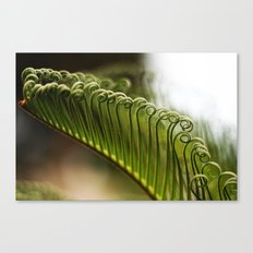 Curly Canvas Print
