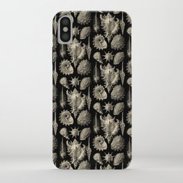 Ernst Haeckel Prosobranchia Sea Shells iPhone Case