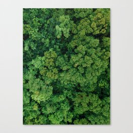 Greenery Forest (Color) Canvas Print