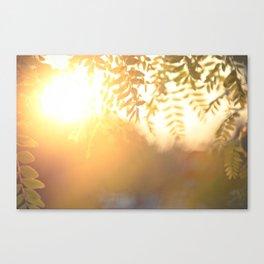 Sun Soak Canvas Print