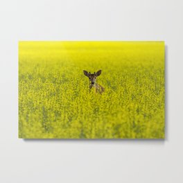 Buck in Canola Metal Print
