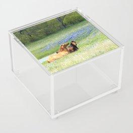 Horses & Bluebonnets Acrylic Box