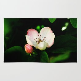 Quince Pink Flower and Bud Rug