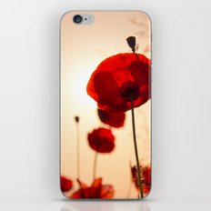 Poppy flower in the sun iPhone & iPod Skin
