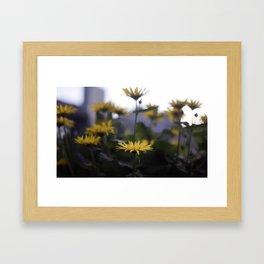Bursts of Gold Framed Art Print