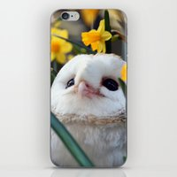 rocky iPhone & iPod Skins featuring Rocky by Astrid Ewing
