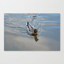 Mallard duck swimming in a turquoise lake 1 Canvas Print