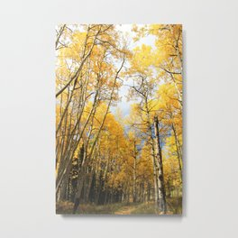 Golden Walk Through Aspen Lane Metal Print