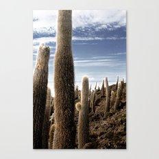 Cactus in Incahuasi Canvas Print