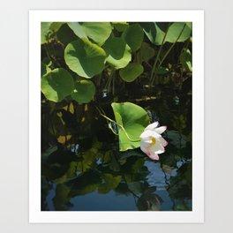 leaning lotus Art Print