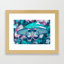 Teal and Peach Butterfly Framed Art Print