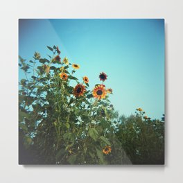Summer Sunflowers in Bloom Against a Blue Sky  - Film Photograph Metal Print