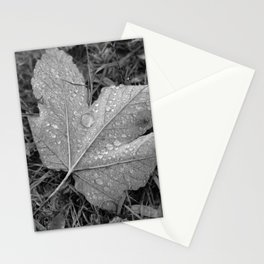 Water drops on leaf maple, black and white photo Stationery Cards