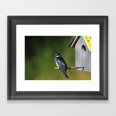 Barn Swallow Framed Art Print