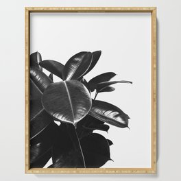 Black Ficus Elastica Serving Tray