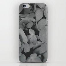 Black and White Hydrangeas iPhone & iPod Skin
