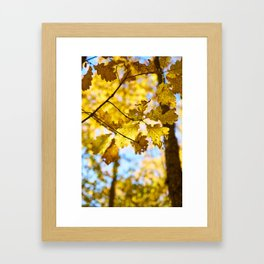 Golden Leaves Framed Art Print