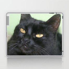 Relaxed Black Cat Portrait  Laptop & iPad Skin