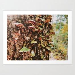 Rainbow Mushroom Fungi Art Print