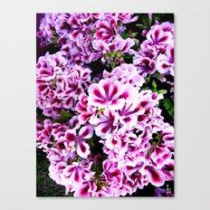 Martha Washington Geranium I Canvas Print