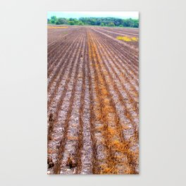 Reaped Canvas Print