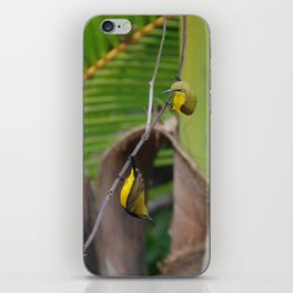 Sunbird Love iPhone Skin