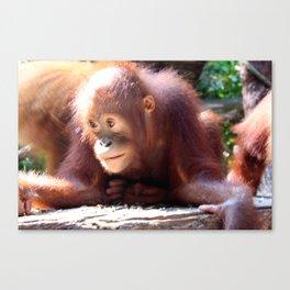 Orangutan at Singapore Zoo Canvas Print