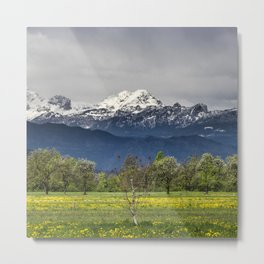 Green field with snowy alps Metal Print