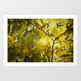Aged Golden Leaves Autumn Botanical / Nature Photograph Art Print