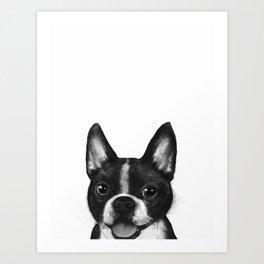 boston terrier Art Print
