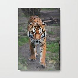 The Bengal Tiger Metal Print