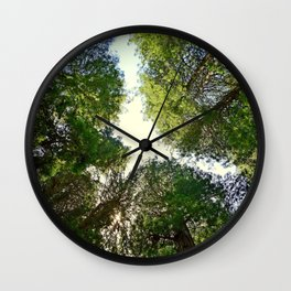 Muir Woods Study 6 Wall Clock