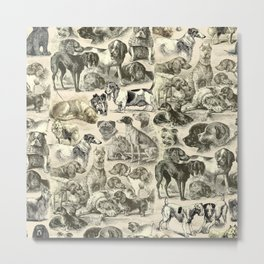 KENNEL - OVER 20 DOG BREEDS COLLAGE Metal Print
