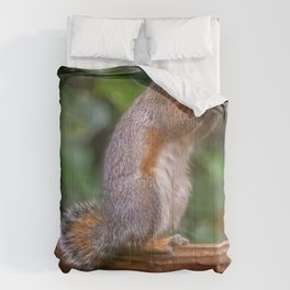 Cyril the Squirrel Comforters