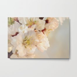 Beautiful blossoms on white Metal Print