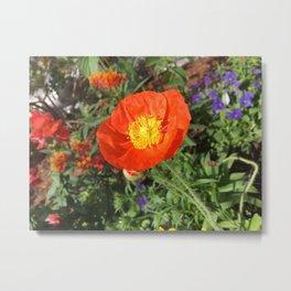 Orange/Red Flower Metal Print