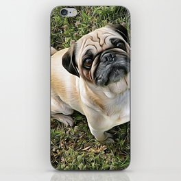 Two Cute Pugs . . .  We are Gorgeous and we Know It! iPhone Skin