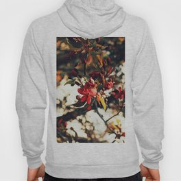Blooming at night Hoody
