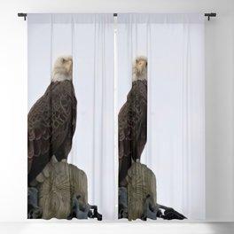 Bald Eagle Blackout Curtain