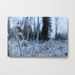 Icy Field Metal Print