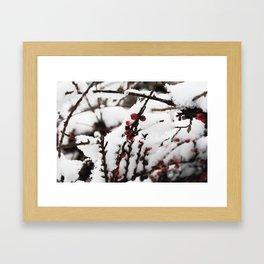 Winter Berrys Framed Art Print
