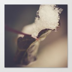 Snow Filled Leaf Canvas Print