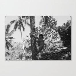 Climbing palm tree Canvas Print