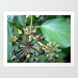 Ants on Plants Art Print