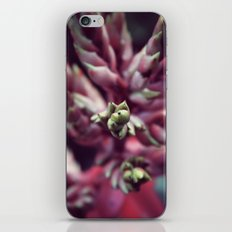 Sarasota iPhone & iPod Skin