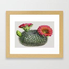 Barrel Cactus Framed Art Print
