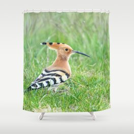 Hoopoe, Common Hoopoe (Upupa epops) Eurasian Hoopoe Shower Curtain