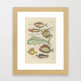 Vintage Fish Illustration IV Framed Art Print