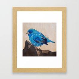 Indigo Bunting Framed Art Print