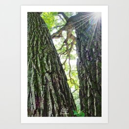 The Forest through the Trees Art Print